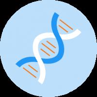 DNA - Copy